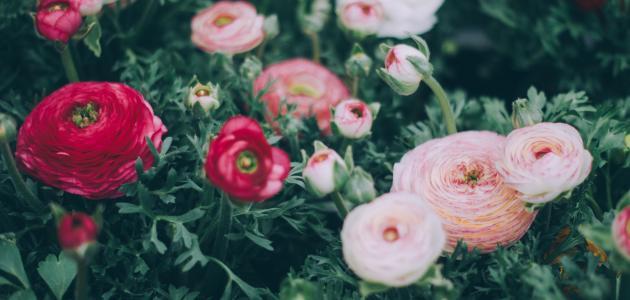 صور كلمات من ورد , اجمل عبارات قيلت على صور من الورد