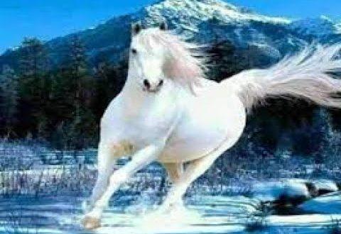 صور رؤية الحصان في المنام للعزباء , تفسير رؤية الحصان للعزباء في المنام