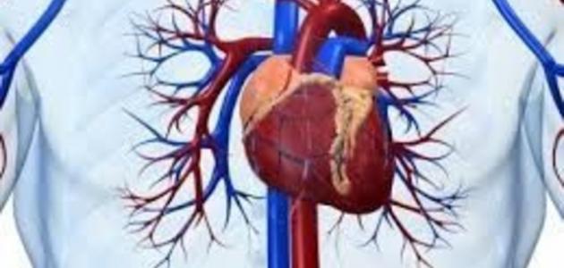 صورة علاج مرض القلب , الوقاية من مرض القلب
