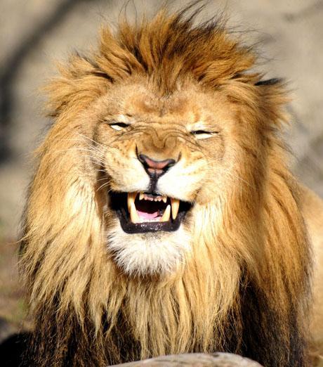 صور حيوانات تضحك عمرك شوفت حيوانات تضحك احاسيس بريئة