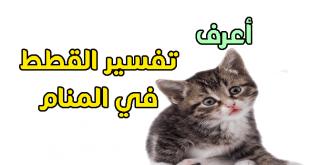 صور تفسير الاحلام القط , تاويل رؤيا القط في المنام