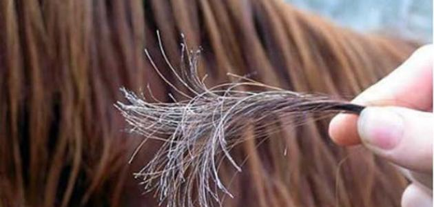 صور وصفات لعلاج تقصف الشعر , ما هو اسهل طريقة لعلاج الشعر المتقصف