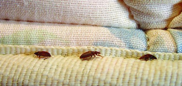 صورة اسباب ظهور الحشرات في المنزل , ازعاج الحشرات وكيفية التخلص منها