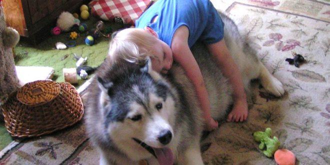 صورة تربية الكلاب في المنزل , للحراسة ام للاهتمام تربية الحيوانات في المنزل