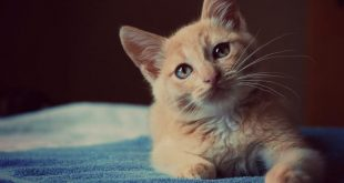 صورة القطط فى المنام , تفسير رؤيا القطط فى المنام