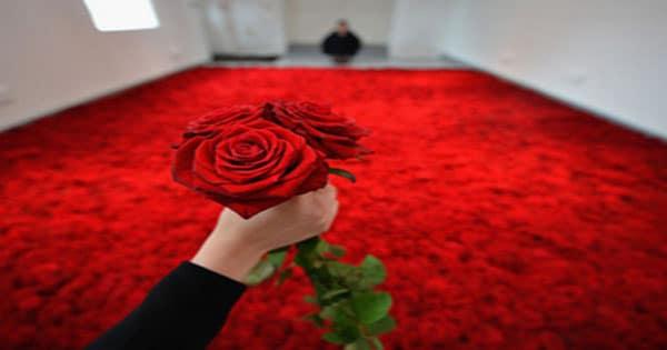 صورة وردة حمراء في المنام , الوان ورود في الاحلام خير ام شر