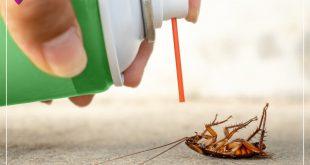 صور افضل مبيد للصراصير , عايزة فورا طريقة اتخلص بيها من الصراصير في البيت ضروري