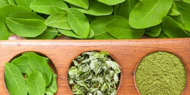 صورة فوائد نبات المورينجا , تعرف على الاهمية العلاجية لنبات المورينجا