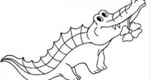 صورة صورة تمساح للتلوين , صور لتعليم الاطفال التلوين