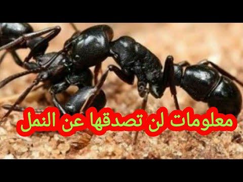 صورة معلومات غريبه عن النمل , حقائق مزهله عن النمل
