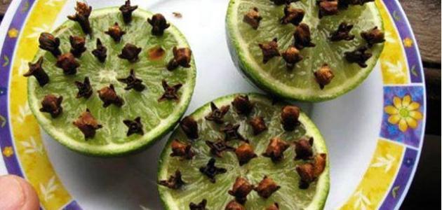 صورة طريقة التخلص من الذباب , وصفات منزليه للقضاء علي الذباب نهائيا
