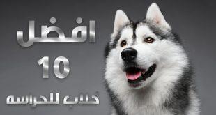 صورة افضل انواع الكلاب , تعرف علي افضل انواع الكلاب للتربيه