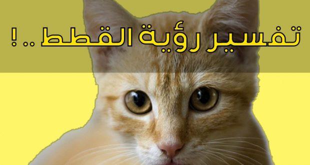 صورة ما تفسير القطط في المنام , اكتشف عالم الاحلام