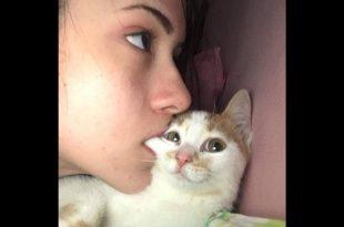 صورة ضحك مع القطط , الطف كائنات بالكون