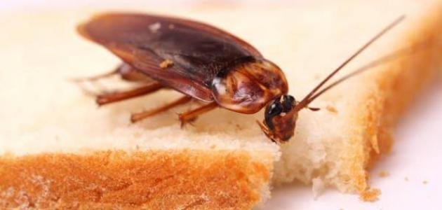 صورة افضل طريقة للتخلص من الصراصير , اشياء لا تكلفك لتقتلي الصراصير