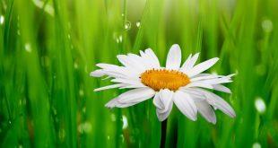 صورة خلفيات زهور روعة , للورد طاقه ايجابيه هتتنقل ليك
