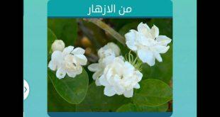 صورة من الزهور 6 حروف , الغاز فطحل العرب