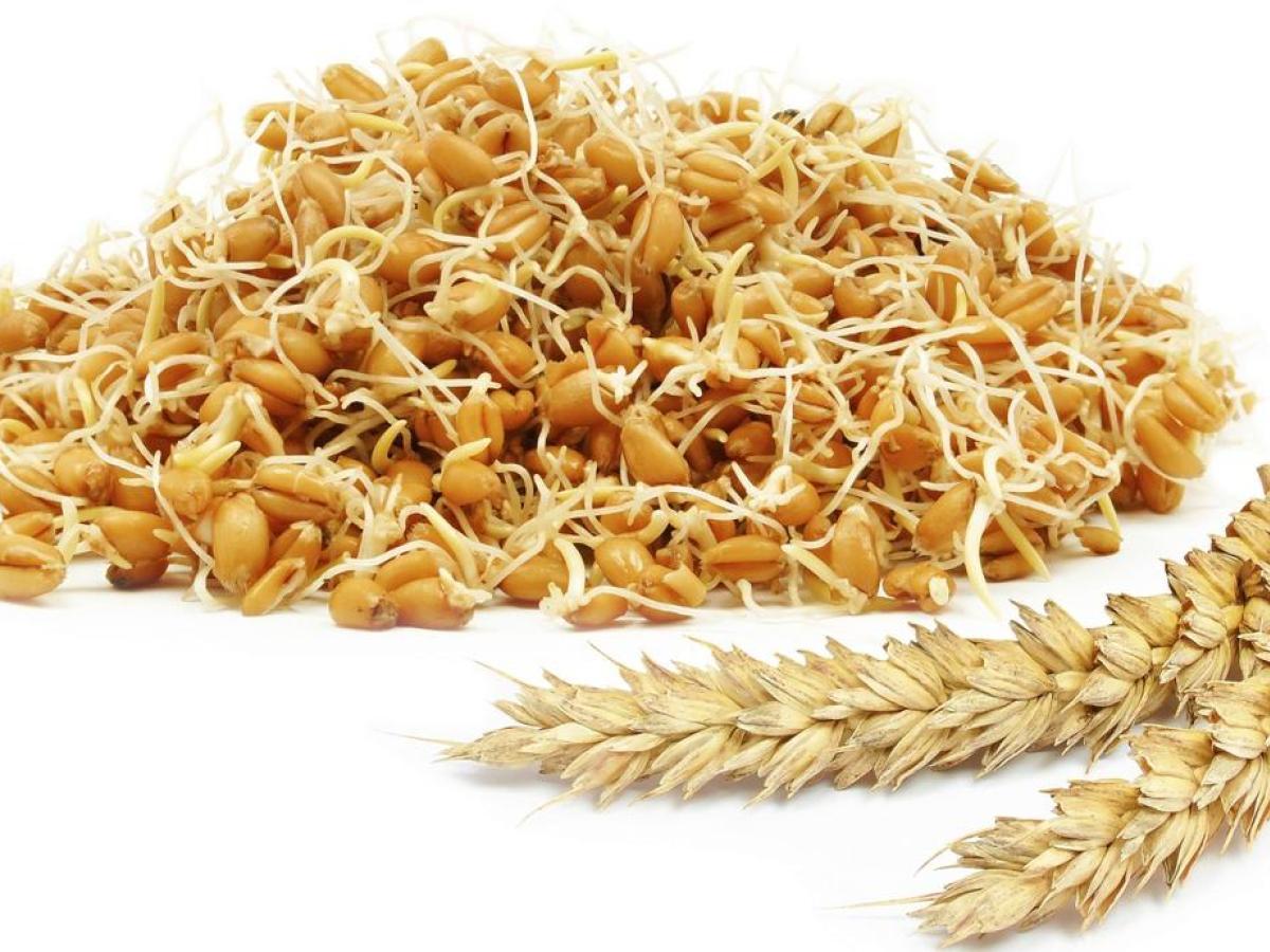 صورة فوائد القمح المحمص , تعرف علي فوائد القمح المحمص